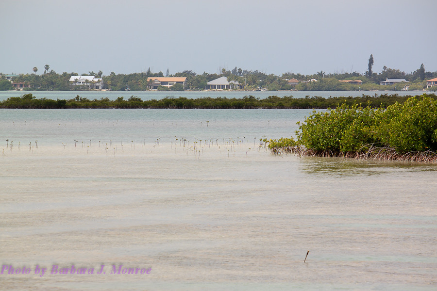 Big Pine Key (2 of 14)