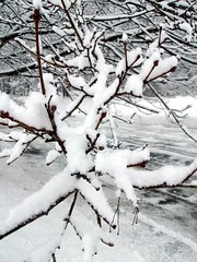 SnowTree_CloseUp_211b