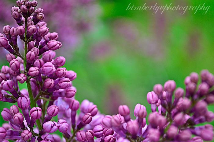 smells-like-spring