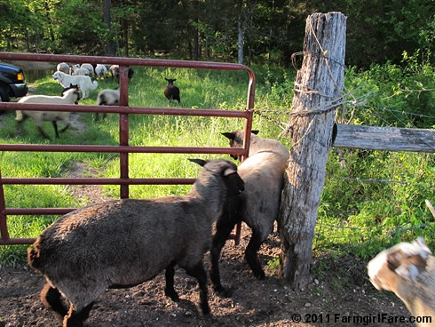 Off To Greener Pastures - Farmgirl Fare