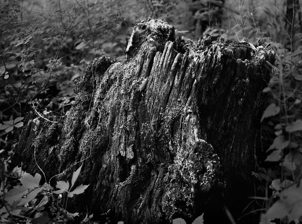 Fallen Tree (Multi-Image Composite w/ large format) - Test