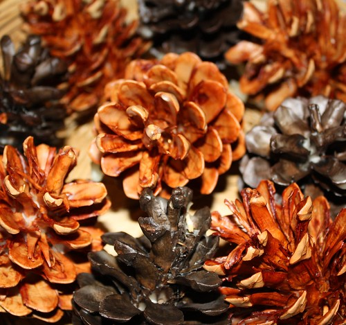 Beeswax Pinecone
