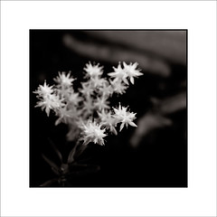 (Jose Luis Durante Molina) Tags: bw naturaleza flores macro plantas bn virado impresion terminada cuadrada fantasticflower joseluisdurante