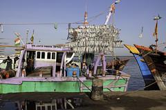 Gujarat : Veraval, Seaport #1 (foto_morgana) Tags: india fish boats town asia seafood fishingboats seaport gujarat dockyard trawlers fishingport saurashtra veraval junagadhdistrict kharwas