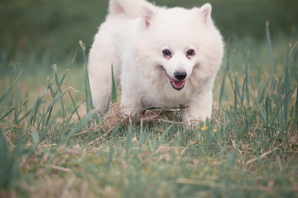 我是隻愛笑的狗