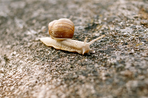 Slow by Zdenko Zivkovic, on Flickr