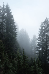 Clouds roll in (crgshpprd) Tags: tains seymour hike x100t pnw pnwwonderland grind first peak pump burn mist low visibility fresh cool crunchy 23mm classic chrome lightroom