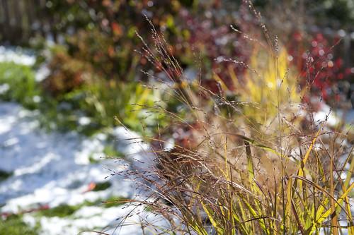 colori scintillanti autunno _7004144 come oggetto avanzato-1