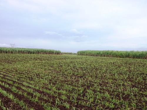 Negros -Bacolod-Savador-San Carlos (8)