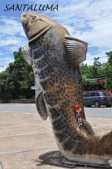Este é um peixe chamado Pintado,diz Aisha!!