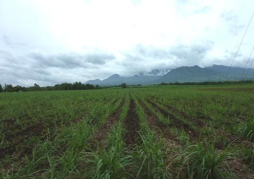 Negros-San Carlos-Bacolod (142)