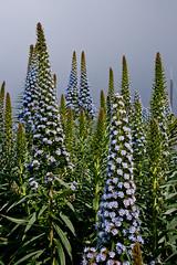 Flowers (digiteyes) Tags: sanfrancisco bayarea ggnpc11