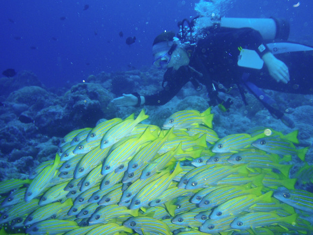 Palau, Diving on the Tropic Dancer