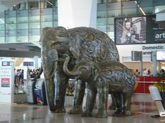New Delhi Indira Gandhi Airport_005