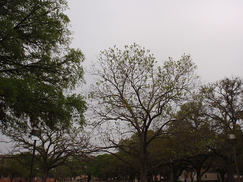 Grey Skies on Campus