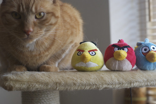 Angry Birds vs Angry Cats