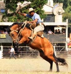 Como quien prende um saludo... (Eduardo Amorim) Tags: horses horse southamerica caballo uruguay cheval caballos cavalos prado montevideo pferde cavalli cavallo cavalo gauchos pferd hest hevonen chevaux gaucho  amricadosul montevidu hst uruguai gacho  amriquedusud  gachos  sudamrica suramrica amricadelsur  sdamerika jineteada   americadelsud gineteada  americameridionale semanacriolla semanacriolladelprado eduardoamorim iayayam yamaiay semanacriolladelprado2010