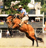 Como quien prende um saludo... (Eduardo Amorim) Tags: horses horse southamerica caballo uruguay cheval caballos cavalos prado montevideo pferde cavalli cavallo cavalo gauchos pferd hest hevonen chevaux gaucho 馬 américadosul montevidéu häst uruguai gaúcho 말 amériquedusud лошадь gaúchos 马 sudamérica suramérica américadelsur סוס südamerika jineteada حصان άλογο americadelsud gineteada ม้า americameridionale semanacriolla semanacriolladelprado eduardoamorim iayayam yamaiay semanacriolladelprado2010 ঘোড়া