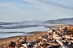 Oregon Coast (Joshi Anand) Tags: usa beach nature oregon america coast nikon raw nef hand outdoor held nikkor hdr joshi anand subtle d300s 1685mm vanagram anandjoshi