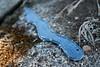 Snakey (Dawn Suzette) Tags: snake sewing lovethiskid recycleddenim dylandesignedasnake hesetuphisownphotoshoottheotherday