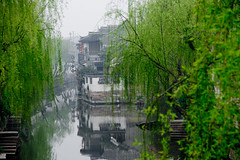 Spring comes to Xitang (shenxy) Tags: china xitang zhejiang     jiaxing