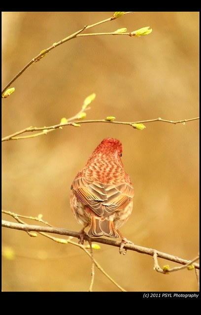 Back of House Finch