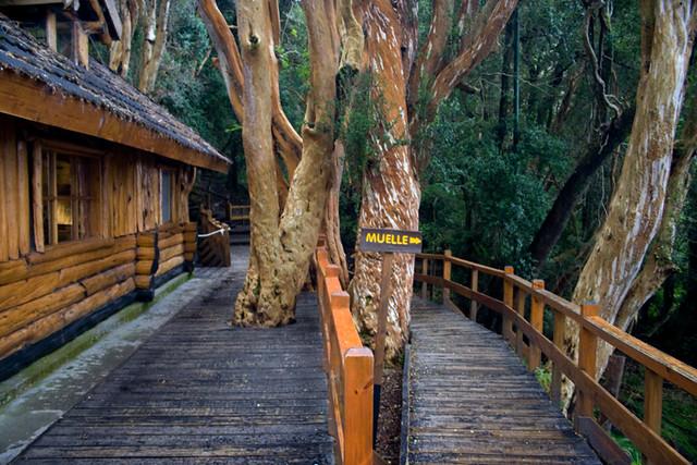 Un paseo por un bosque de arrayanes 101 lugares incre bles for Paredes tapizadas