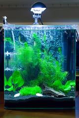 Fluval Flora Tank (saebaryo) Tags: wood canon aquarium flora shrimp 100mm driftwood crystalredshrimp fluval canoneos5dmarkii 5d2 5dii canon100mmf28isl fluvalfloraaquaticplantaquariumkit