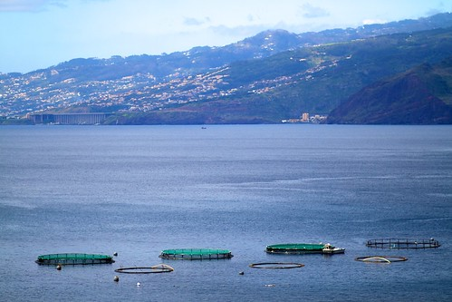 Hatchery in Madeira