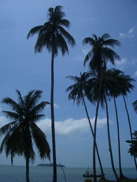 Palm trees in Pulau Besar