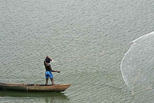 The world 39 s best photos of tilapia and uganda flickr for African rope fish