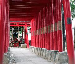 shrine gates (open-arms) Tags: flower film zeiss 50mm tokyo nikon shinjuku fuji  fm3a  zf  makroplanar pro400h tokyophotoclub