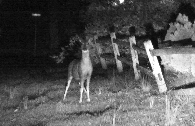 Don't Stand There, Deer!