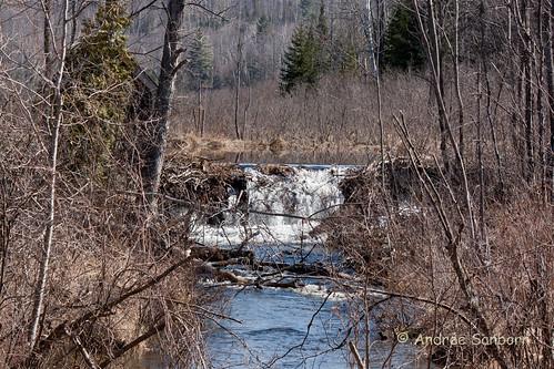 Beaver Pond 5 (13 of 45).jpg