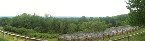Monticello Vineyard Panorama