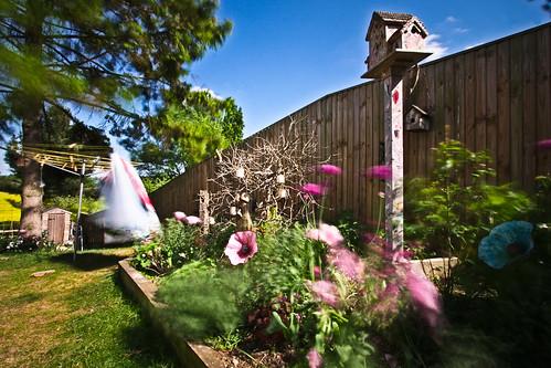 wind blown garden