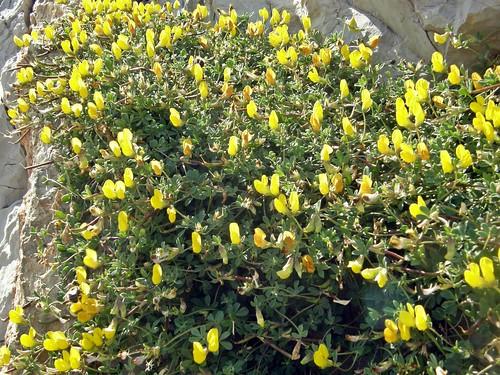 otras flores amarillas