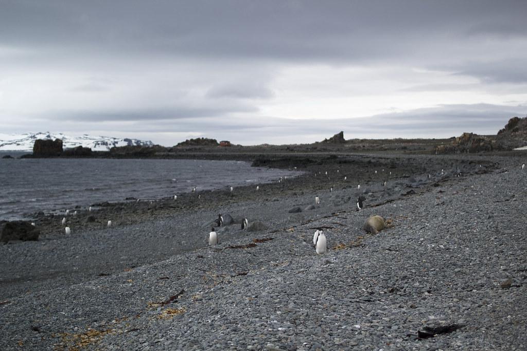 Ardley Island, Antarctica