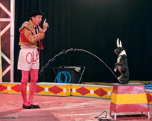 circus  taylorville  illinois  2011
