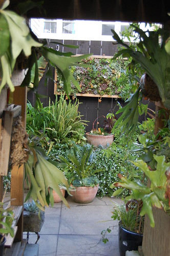 Staghorn Ferns with Succulent Wall