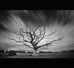 """ NEW WALKING BOOTS TICK THE BOX ~  NEW WEATHER PROOF TROUSERS TICK THE BOX ~ NEW DEAD LONE TREE ~ FABULOUS SKIES TICK THE BOX ~ SHOPPING IS FUN "" (Wiffsmiff23) Tags: longexposure wales dead death deadtree newport lonetree newportcity"