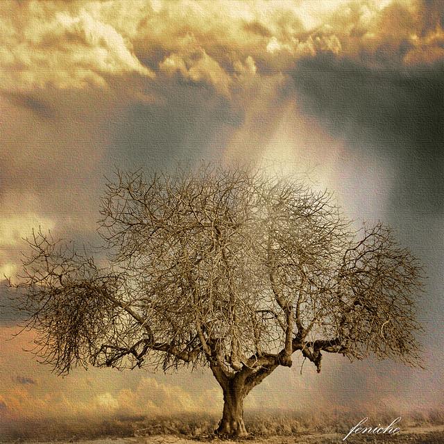 el arbol divino