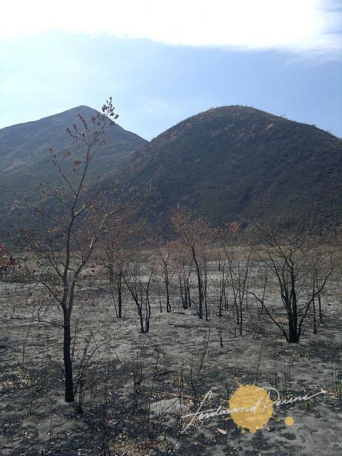 Burnt and barren in Zambales