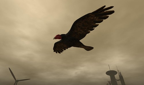 The Wastelands' Turkey Buzzard - (WL: Critter)