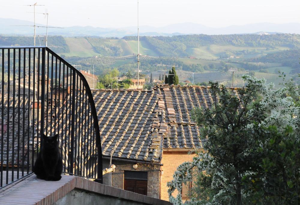 Tuscany, San Gimignano — очень черная кошка