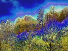 a primitive experiment with some nice colours on the tops of some trees (Fredothefirst) Tags: trees panorama abstract forest colours view edited experiment abstraction colourful edition