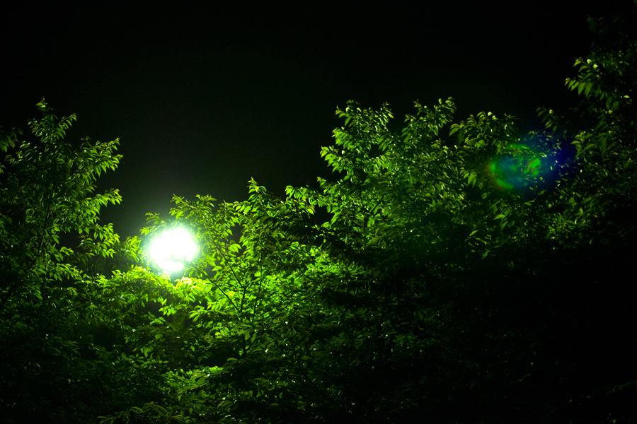 月明かりかと思ってみれば|滋賀県野洲市