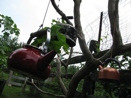 teapot tree