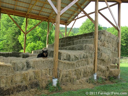 Bear on the bales - Farmgirl Fare