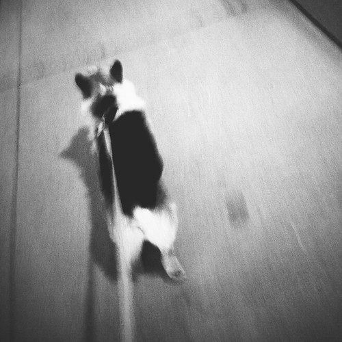 Racer by scoodog / digging iPhoneography